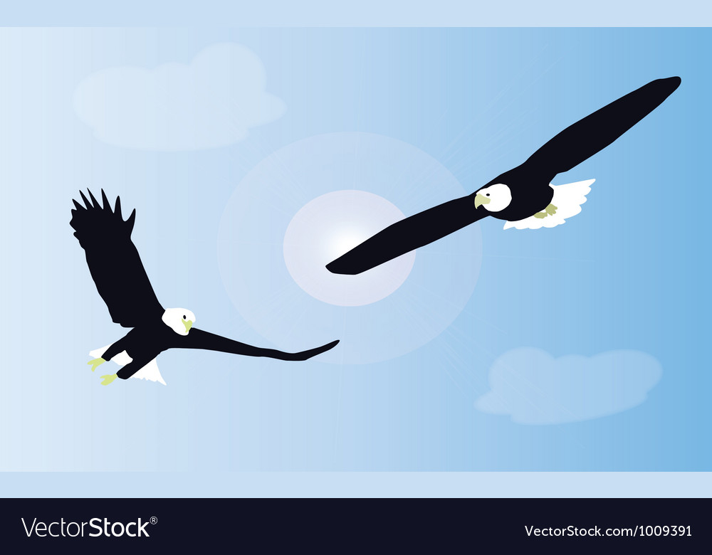 Two white tailed eagles are fighting in mid air vector | Price: 1 Credit (USD $1)