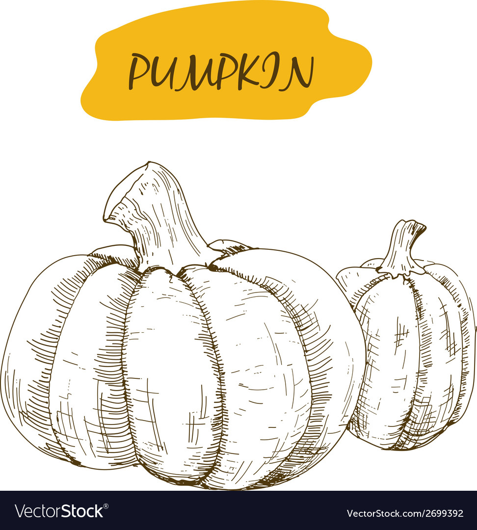 Pumpkin vector | Price: 1 Credit (USD $1)