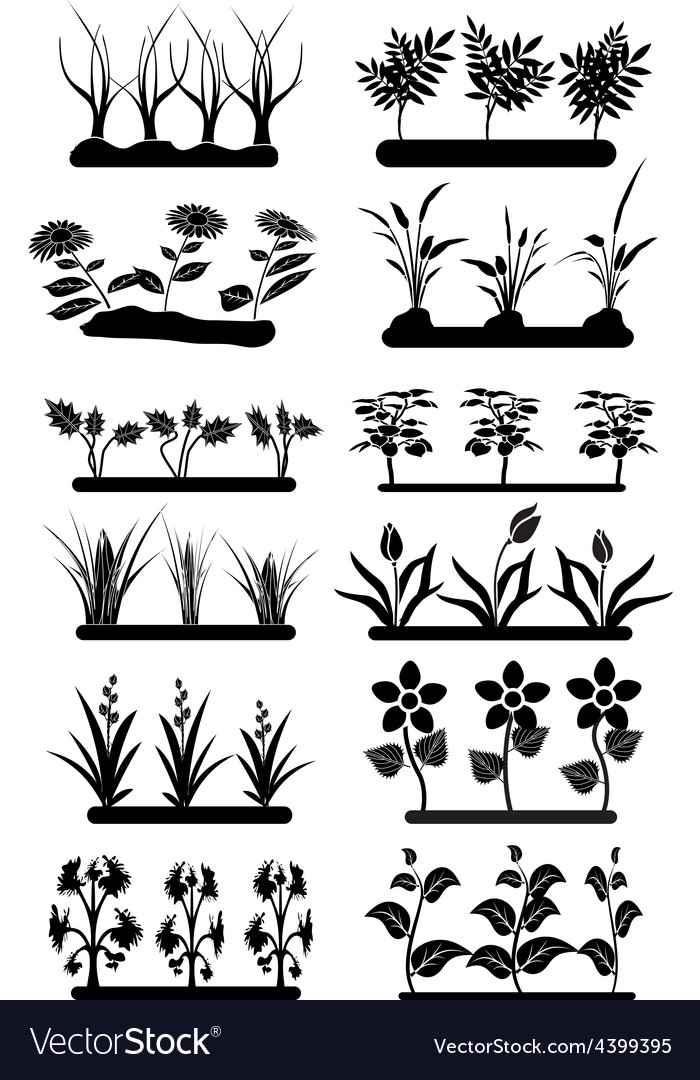 Flower fields set vector | Price: 1 Credit (USD $1)