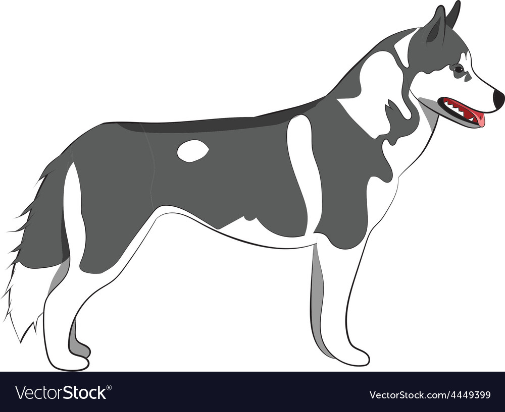 Husky body vector | Price: 1 Credit (USD $1)