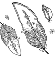 Doodle ethno feathers set vector