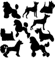 Set of sillhouttes of standing decorative dogs vector