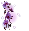 Seamless background with orchids branch vector