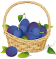 Basket with plums vector