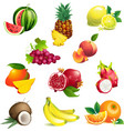 Set of tropical fruits with leaves and flowers vector