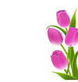 Border of pink tulips vector