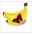 Bananas and red butterfly on a white background vector