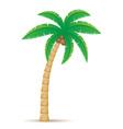 Palm 01 vector
