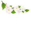 Pastel apple tree flowers vector