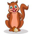 Squirrel cartoon vector