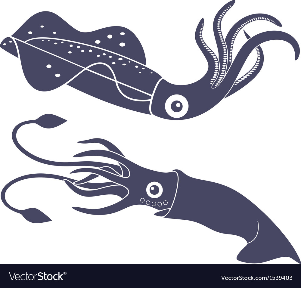 Squid vector | Price: 1 Credit (USD $1)