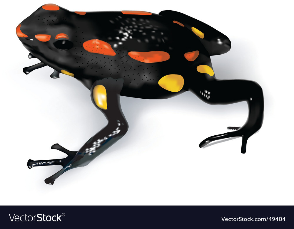 Rio santiago poison-dart frog vector | Price: 3 Credit (USD $3)