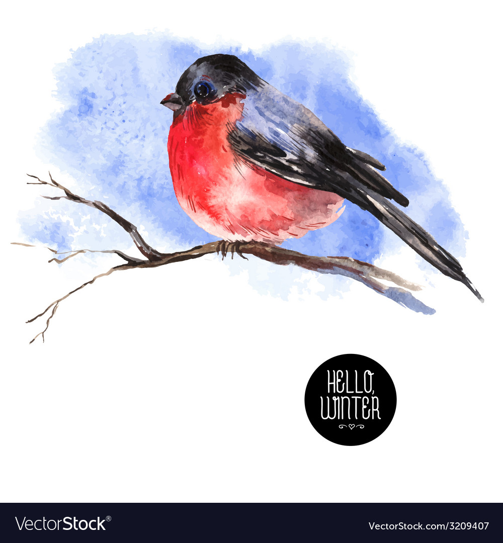 Winter watercolor background with bullfinches vector | Price: 1 Credit (USD $1)