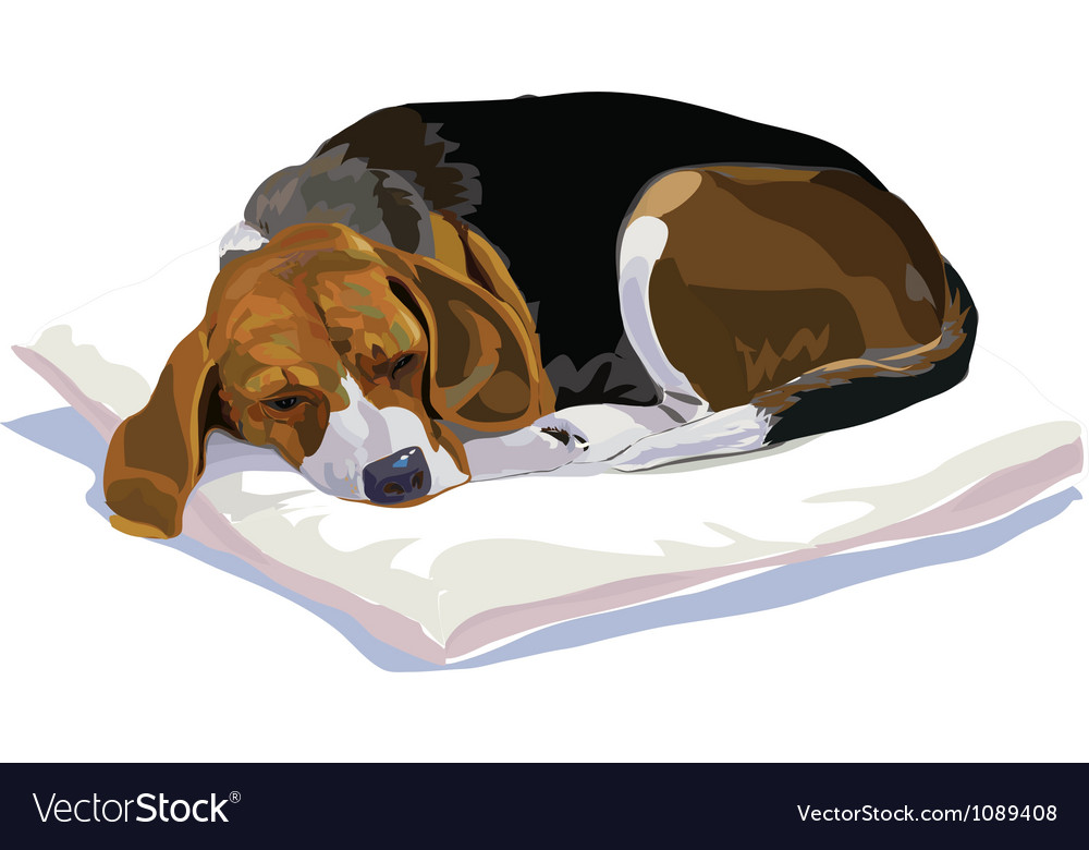 The rest time of beagle vector | Price: 5 Credit (USD $5)