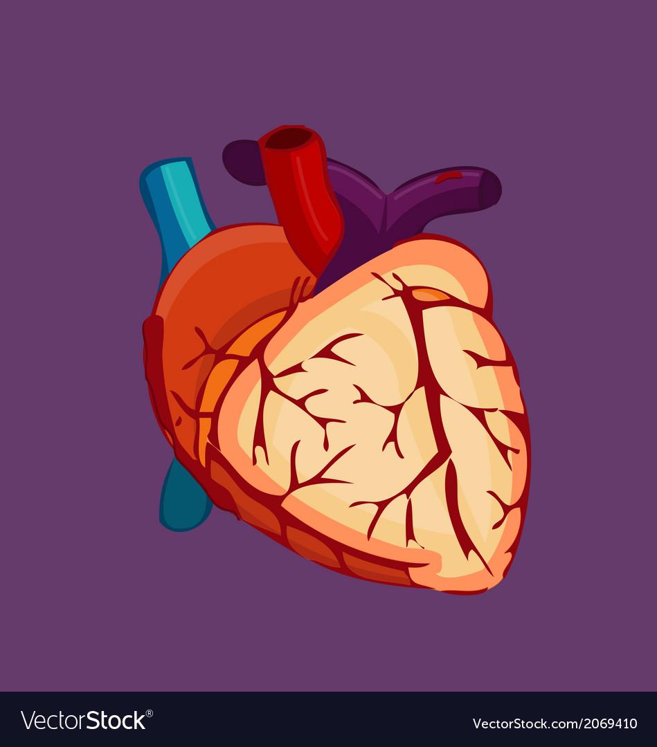 Human organ heart vector | Price: 1 Credit (USD $1)