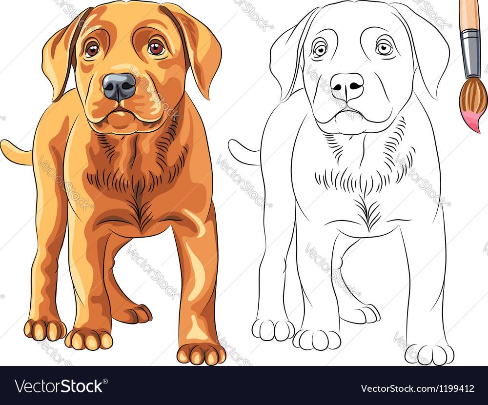Coloring book of puppy dog labrador vector | Price: 1 Credit (USD $1)