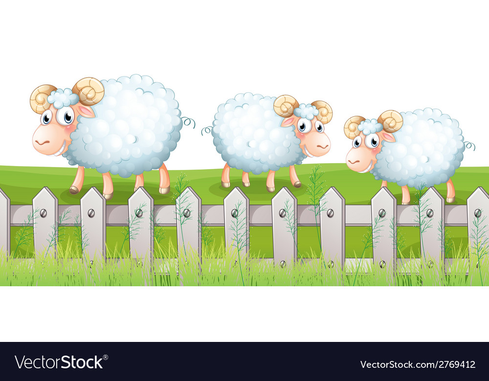 Three sheeps vector | Price: 1 Credit (USD $1)