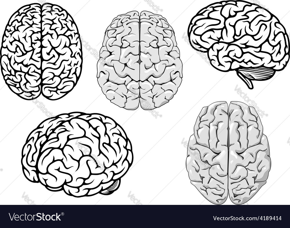 Black and white cartoon human brains vector | Price: 1 Credit (USD $1)