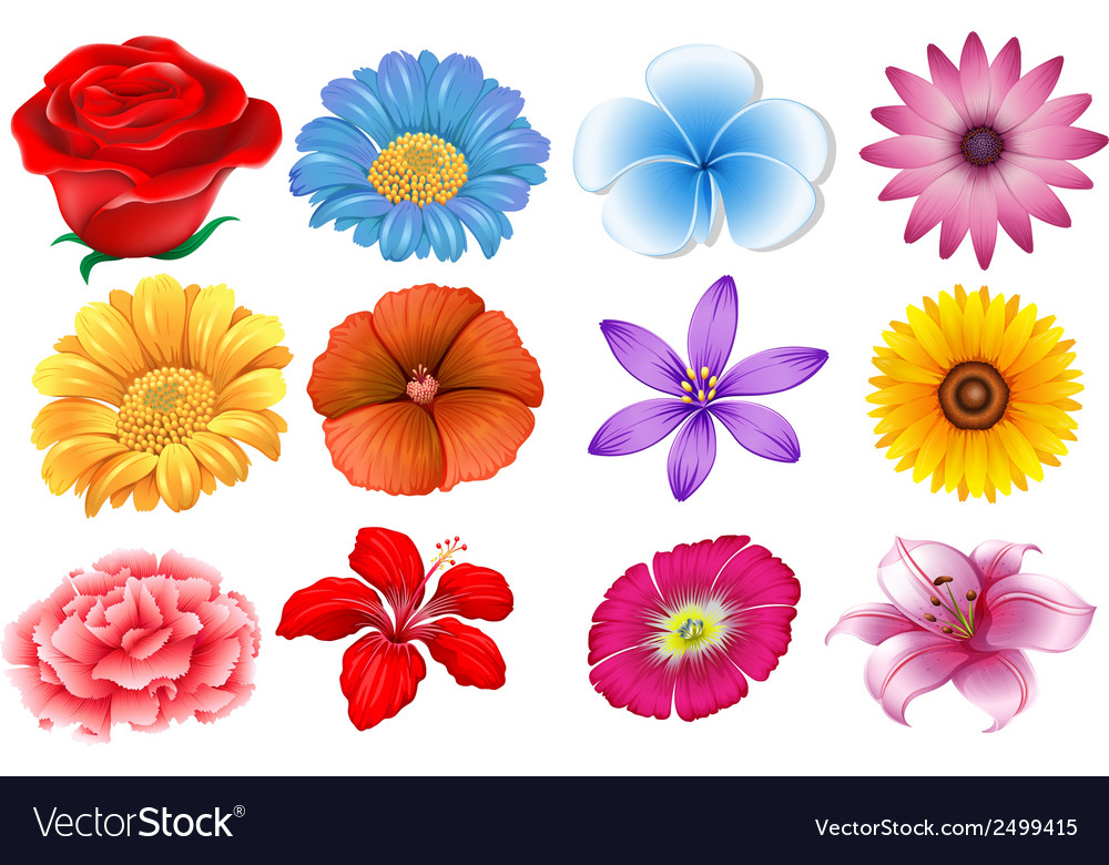 Set of different flowers vector | Price: 1 Credit (USD $1)