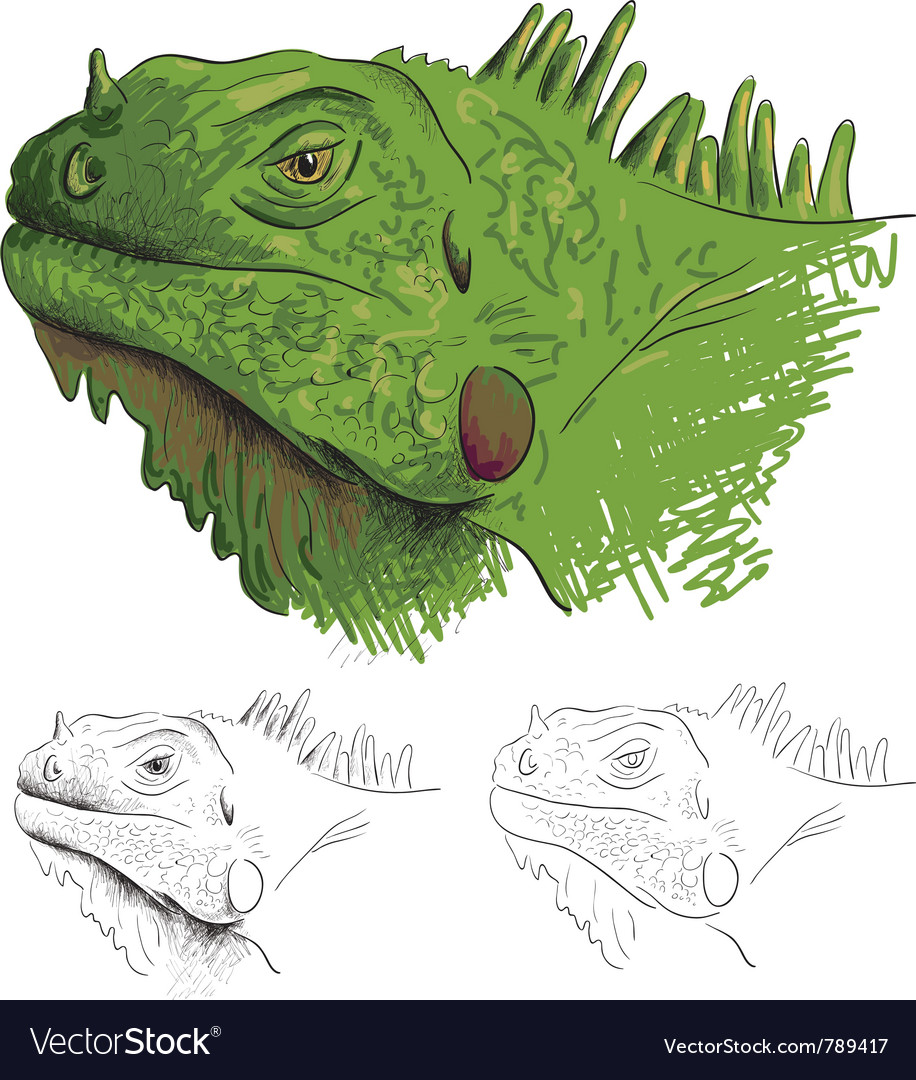 Iguana vector | Price: 3 Credit (USD $3)
