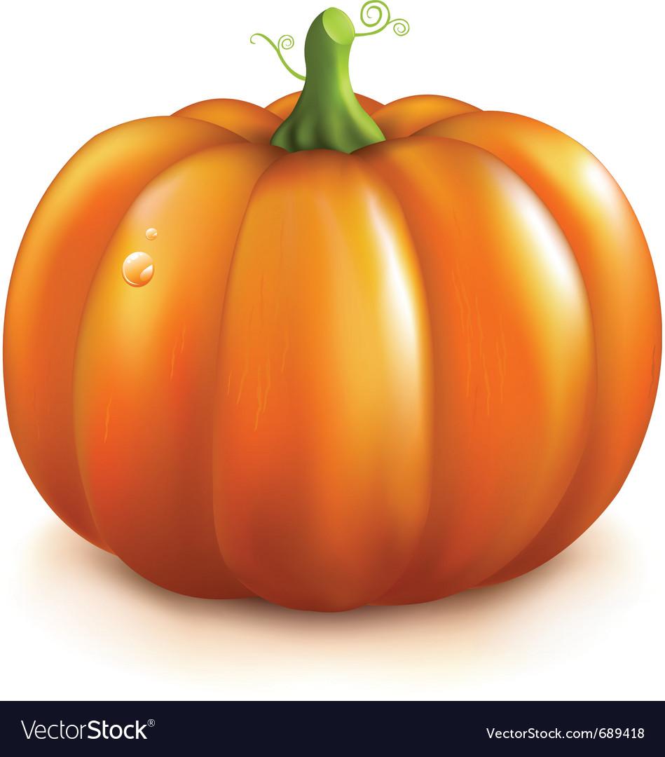 Orange pumpkin vector | Price: 1 Credit (USD $1)