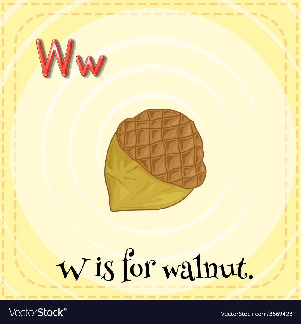 A letter w for walnut vector | Price: 1 Credit (USD $1)