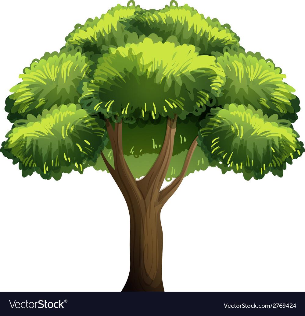 Oak tree vector | Price: 1 Credit (USD $1)