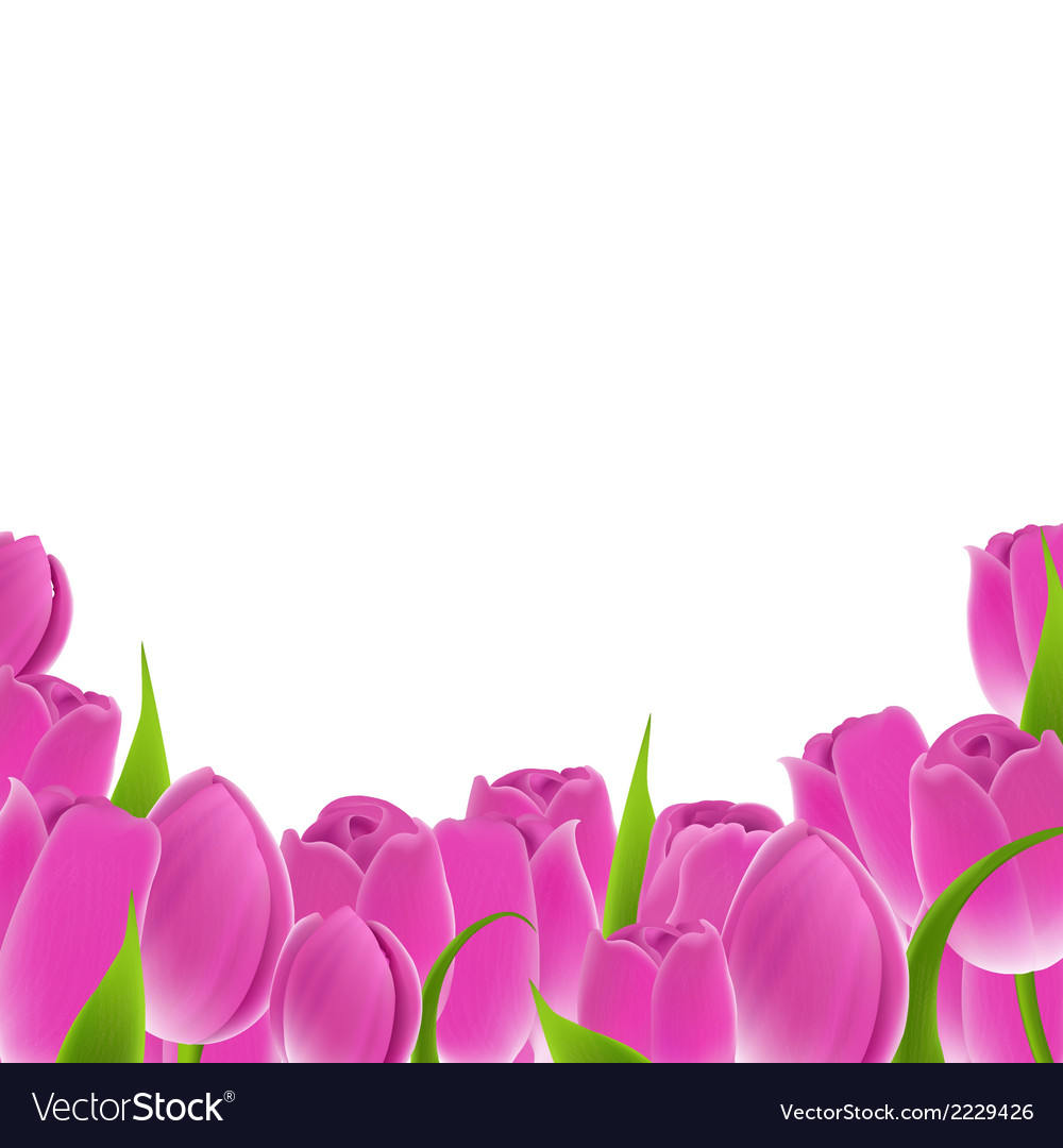 Frame of pink tulips vector | Price: 1 Credit (USD $1)