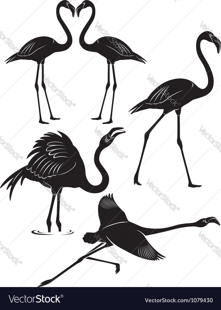 Flamingo vector | Price: 1 Credit (USD $1)