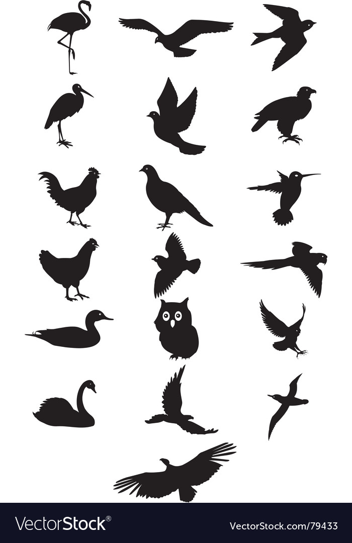 Bird silhouette vector | Price: 1 Credit (USD $1)