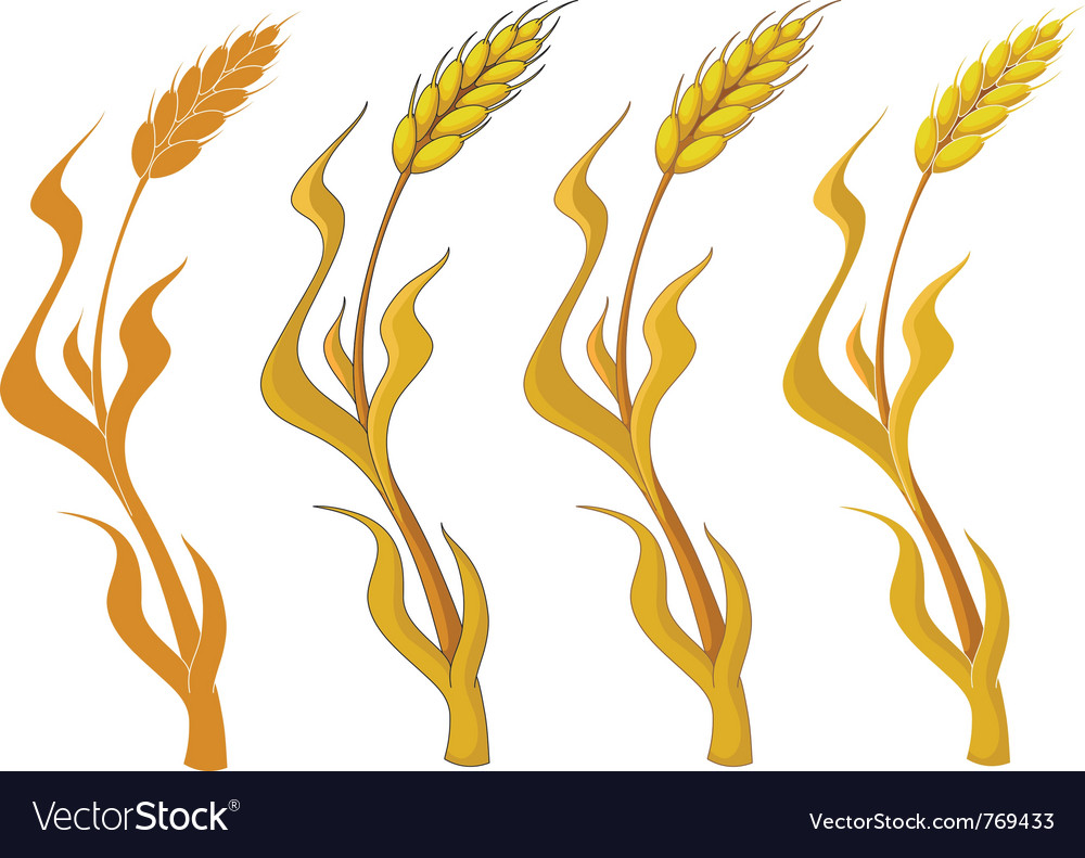 Collection wheat vector | Price: 1 Credit (USD $1)