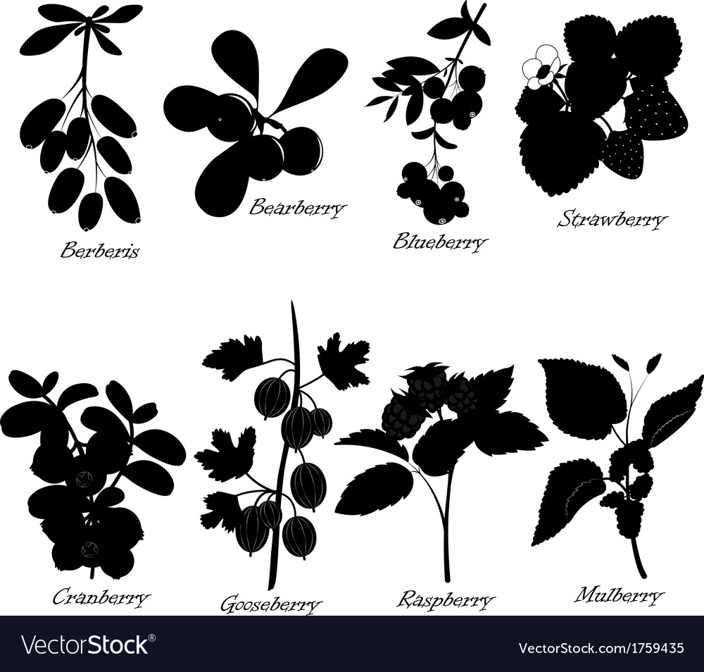 Basic berries collection vector | Price: 1 Credit (USD $1)