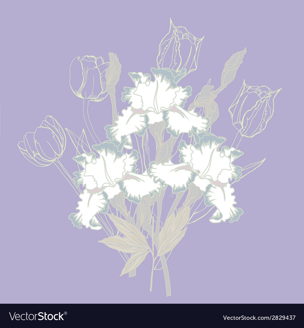Background with white irises vector   Price: 1 Credit (USD $1)