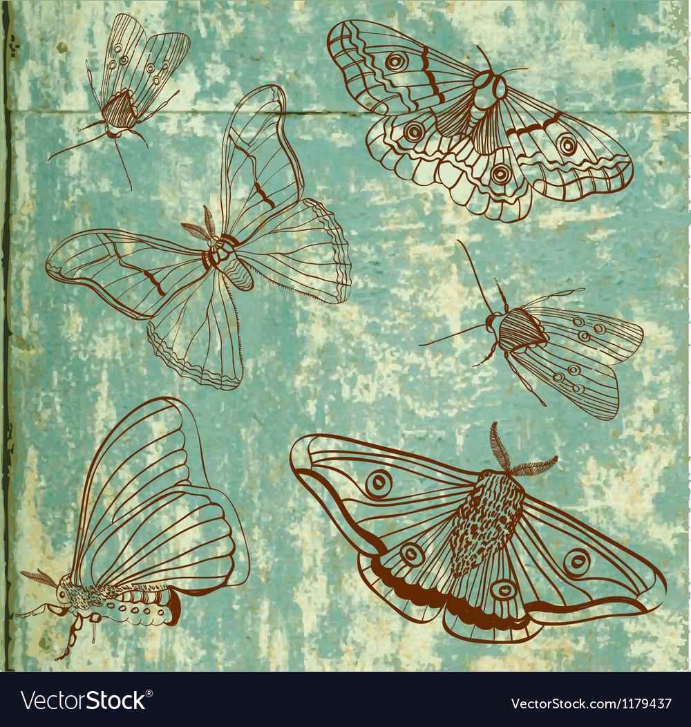 Moth vector | Price: 1 Credit (USD $1)