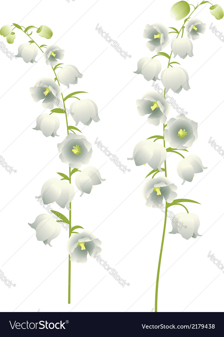Lily of the valley6 vector | Price: 1 Credit (USD $1)