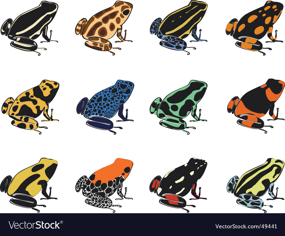 Various species of poison-dart frogs vector | Price: 3 Credit (USD $3)