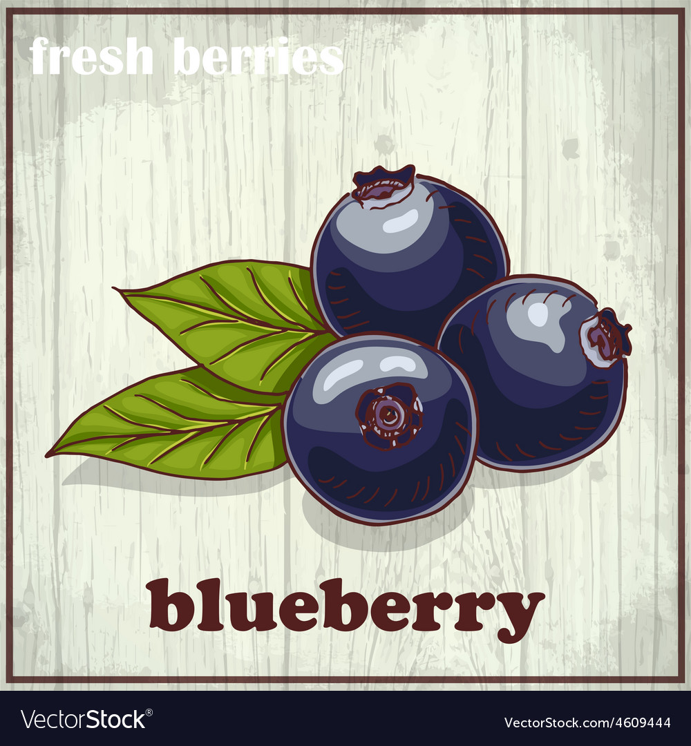 Hand drawing of blueberry fresh vector | Price: 1 Credit (USD $1)