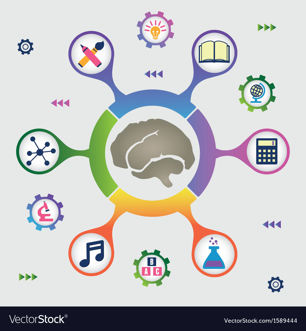 Infographic of brain resources vector