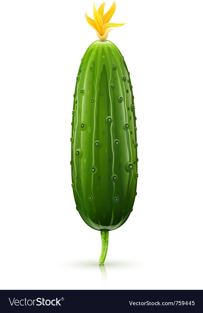Cucumber green ripe vector | Price: 1 Credit (USD $1)