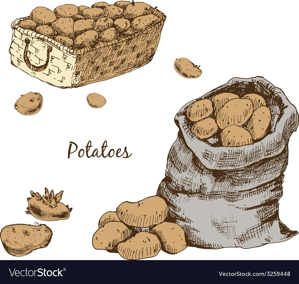 Potatoes vector | Price: 1 Credit (USD $1)