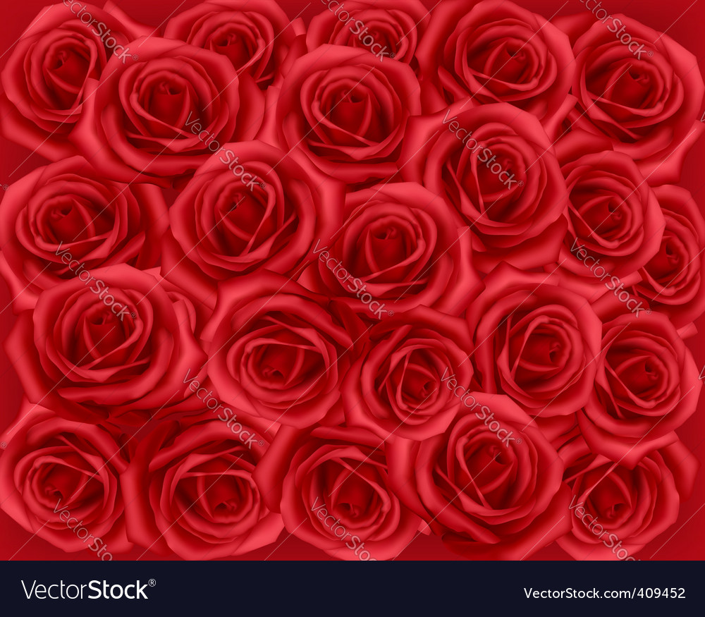 Red roses vector