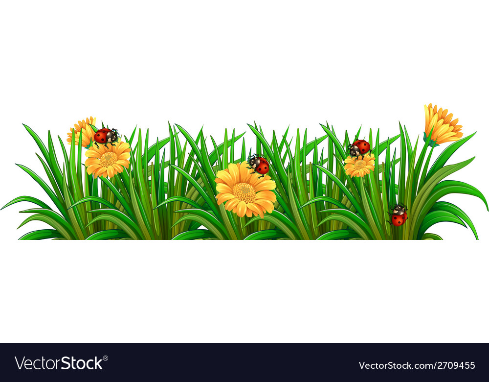 A garden with ladybugs vector | Price: 1 Credit (USD $1)