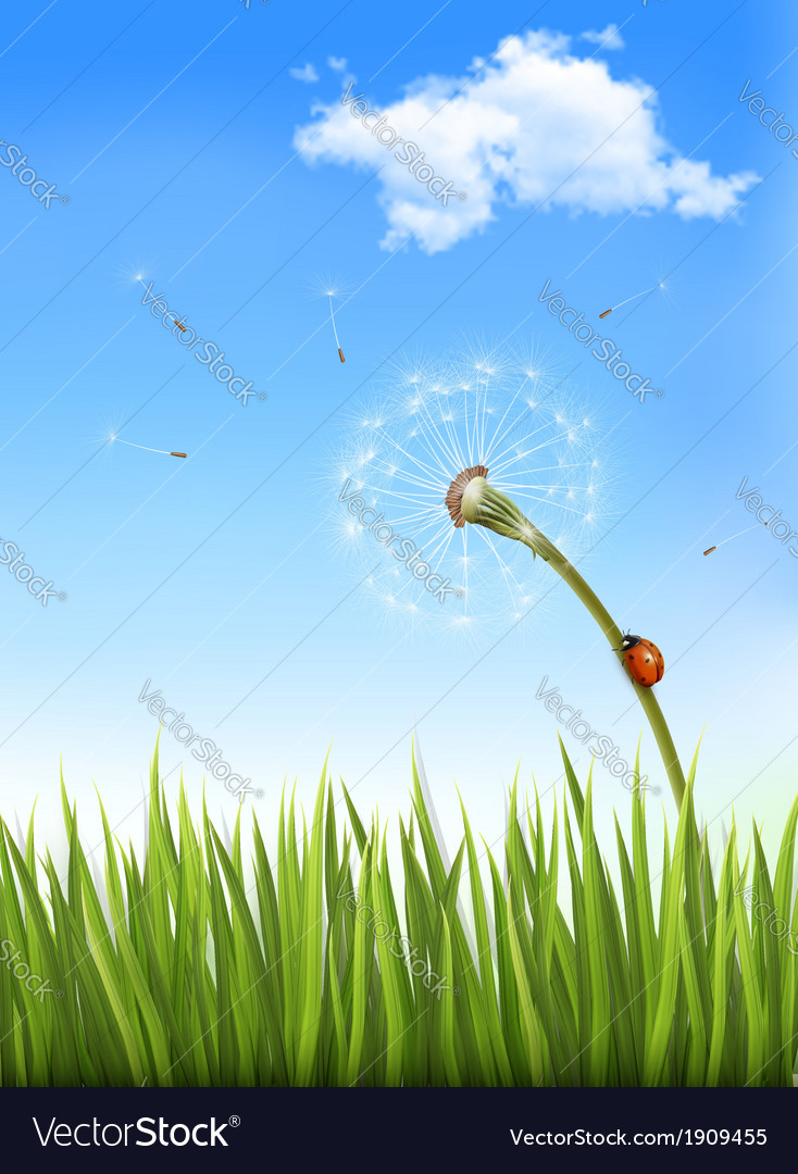 Nature background with a dandelion and a ladybug vector | Price: 1 Credit (USD $1)