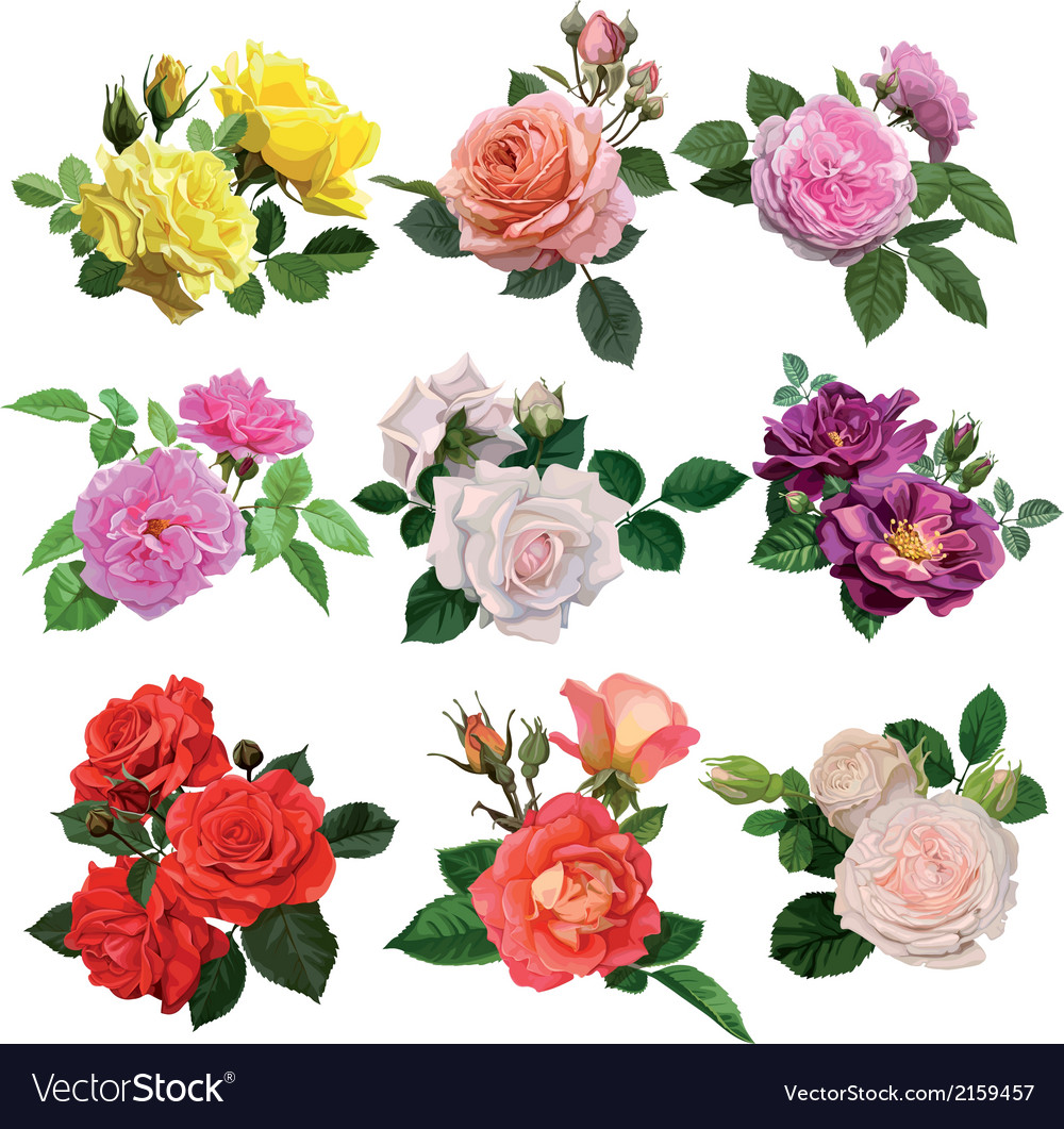 Set of multicolored roses vector | Price: 3 Credit (USD $3)