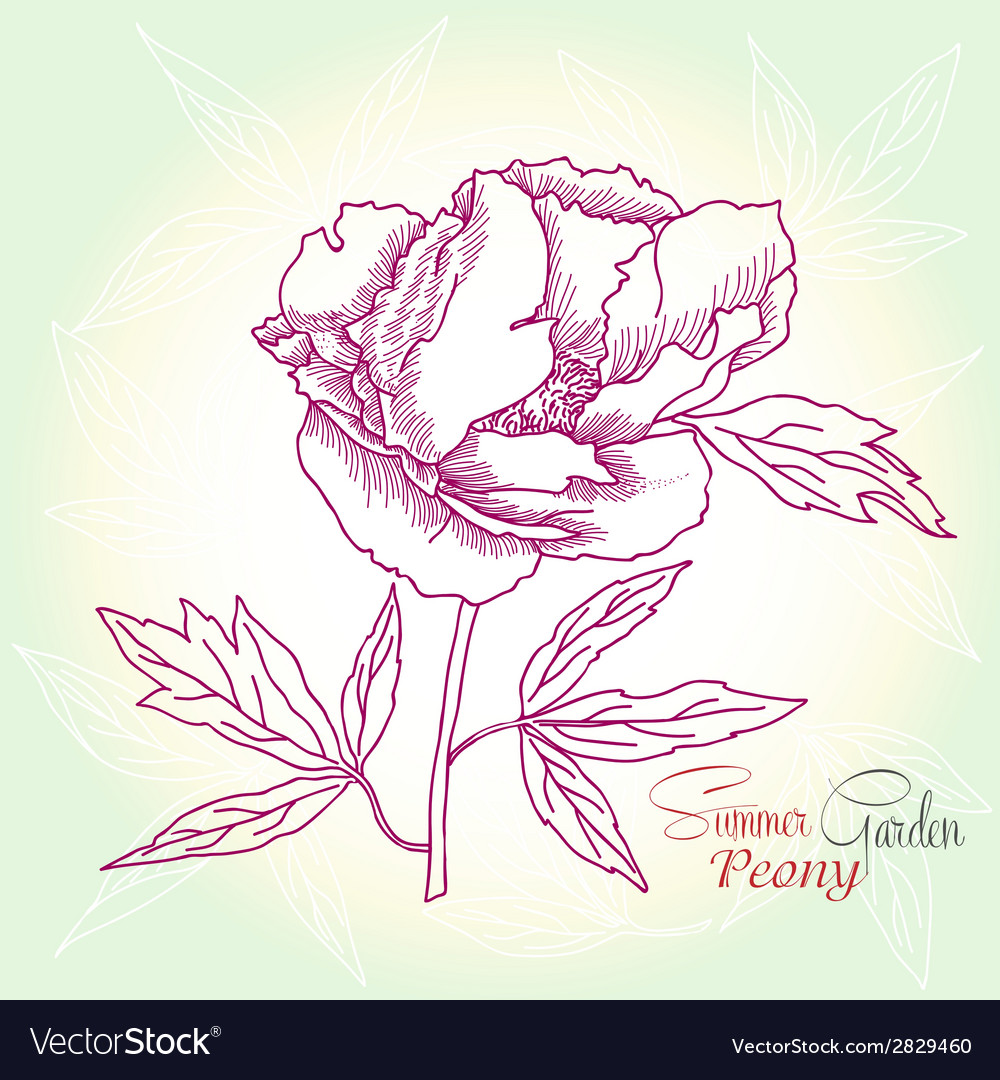 Green background with peony vector | Price: 1 Credit (USD $1)