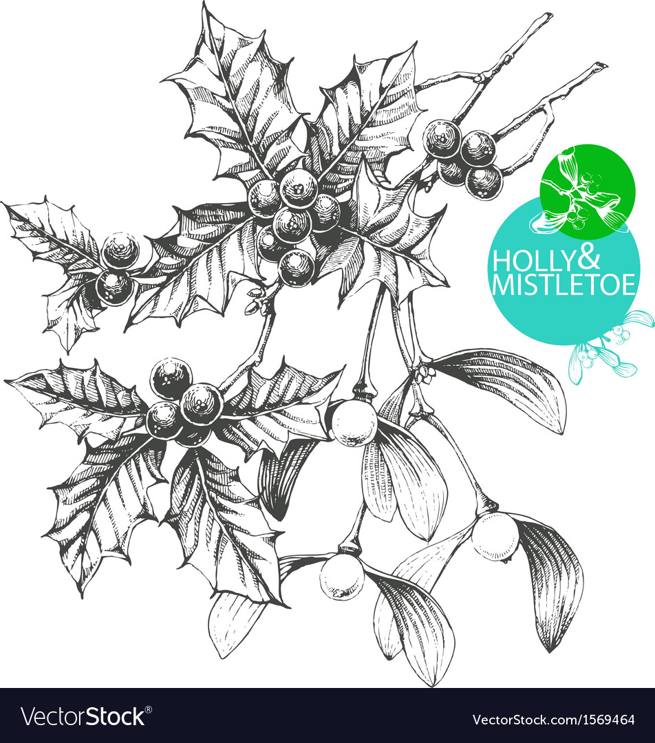 Holly and mistletoe vector