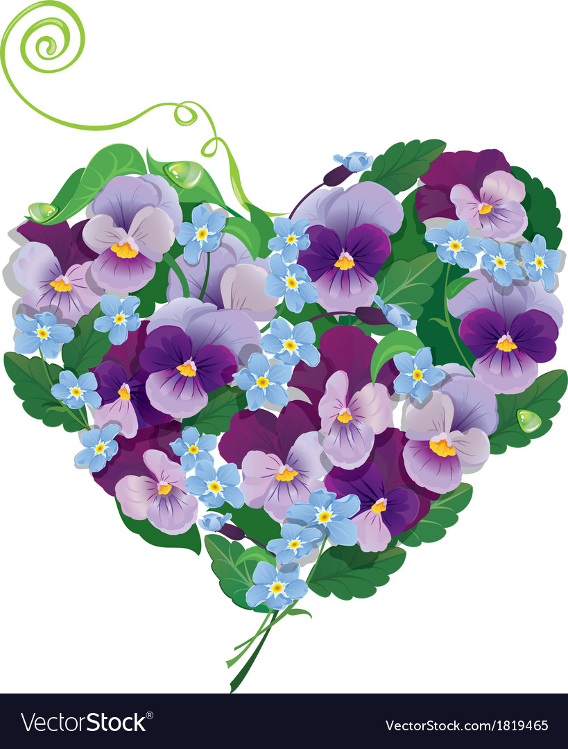Heart shape is made of beautiful flowers  pansy vector