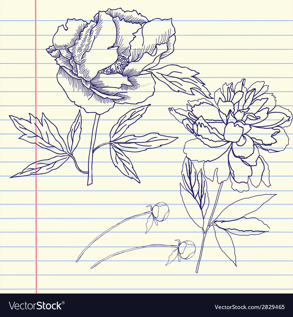 Notebook set with peonies vector | Price: 1 Credit (USD $1)
