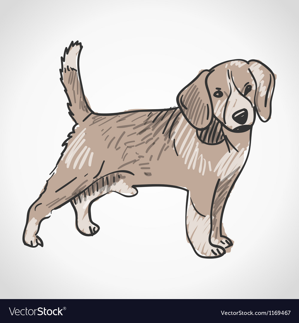 Beagle dog vector | Price: 1 Credit (USD $1)