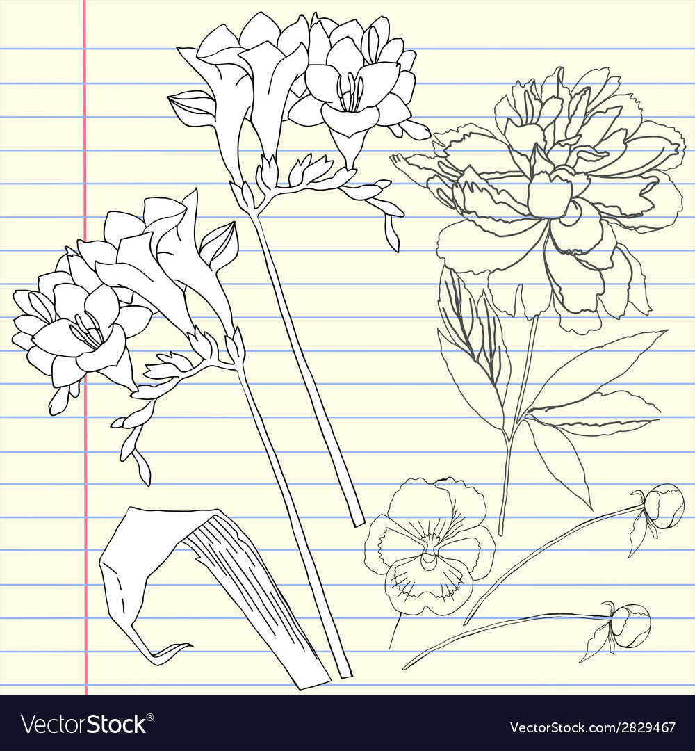 Notebook set with peony and freesia vector | Price: 1 Credit (USD $1)